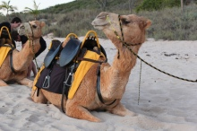 broome-camel-ride-14